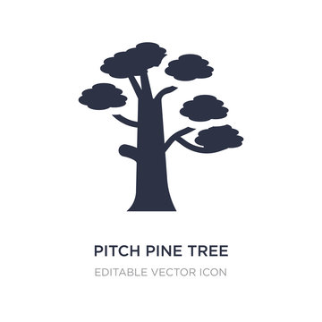 pitch pine tree icon on white background. Simple element illustration from Nature concept.