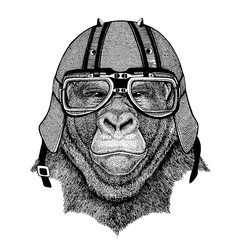 Gorilla, monkey, ape wearing a motorcycle, aero helmet. Hand drawn image for tattoo, t-shirt, emblem, badge, logo, patch.