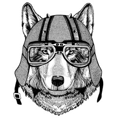 Wolf, dog wearing a motorcycle, aero helmet. Hand drawn image for tattoo, t-shirt, emblem, badge, logo, patch