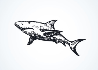 Shark. Vector drawing