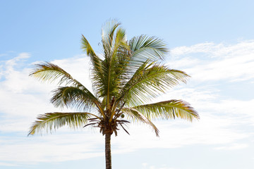 The top of a palm tree against a bright blue sky
