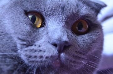 Fotobehang Leeuw cute cat photo