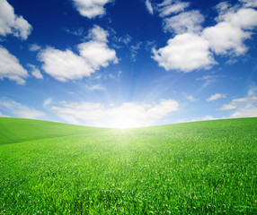 Fototapete - Green meadow and sun.