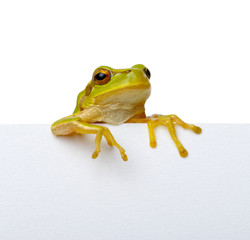 Green frog and text message.