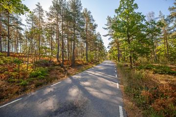 Schweden Sweden Forest Street