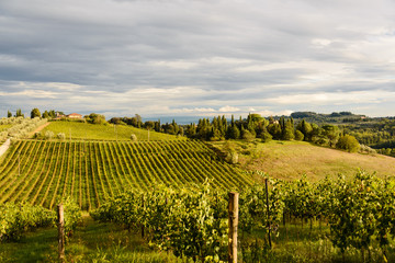 Wall Murals Vineyard Herbstliche Toskana auf einem Weingut im Chiantigebiet im Schein der untergehenden Abendsonne