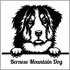 Bernese Mountain Dog - Peeking Dogs - breed face head isolated on white