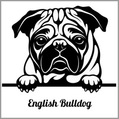 English Bulldog - Peeking Dogs - - breed face head isolated on white