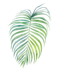 Tropical leaf. Watercolor illustration.