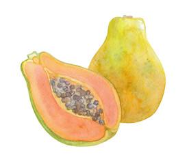 Papaya. Watercolor illustration.