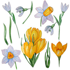 Hand painted watercolor set of spring flowers.