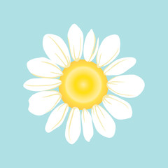 Set of White daisy or chamomile for background.Isolated. Vector illustration
