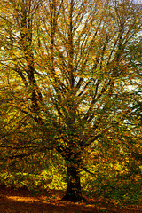 Tree leaves in autumn with different colors