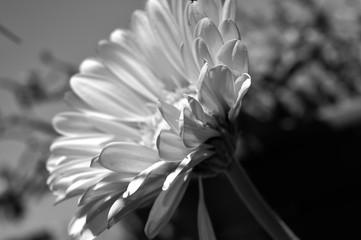 Printed kitchen splashbacks fleurs