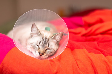 Pet care concept Sleepy cat wearing Elizabethan collar, E-collar or buster collar for protection the wound after surgical operation with copy space Fotobehang