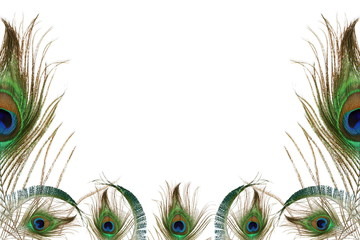 peacock feather in white background with text copy space
