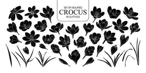 Set of isolated silhouette Crocus in 32 styles.