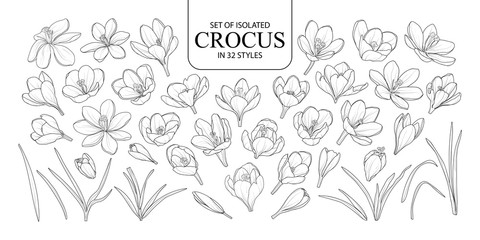 Set of isolated Crocus in 32 styles.