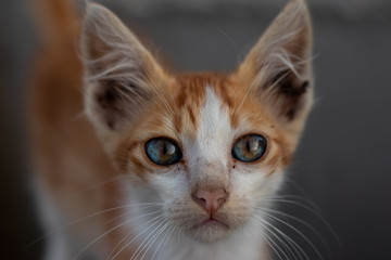 orange tabby cat photography