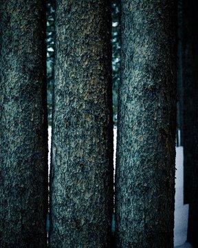 three brown wooden tree log