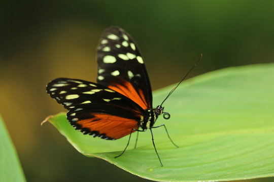 orange and black butterfly on green-leafed plant