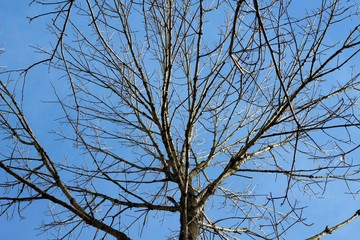 The view of the bright blue sky though the bare branches.