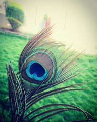 close-up photography of green and blue peacock feather