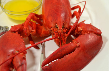 Steamed Lobster Served with Melted Butter
