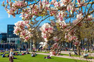 Frühling in Stuttgart