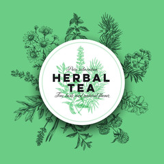 Vector hand drawn tea herb Illustration.