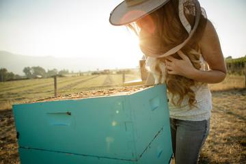 Beekeeper looks at bee hive box