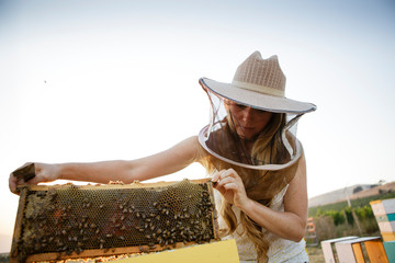 Beekeeper inspects honeycomb built on bee hive box frame
