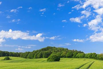 Blauer Himmel mit weißen Wolken über Gerstenfeld im Frühling in der Holsteinischen Schweiz