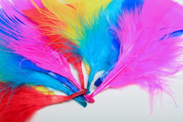 Bright and colourful feathers arranged on a white background
