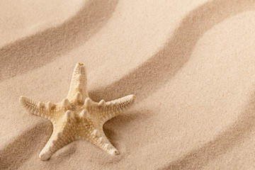 Starfish or sea star on the seashore of a rippled summer sandy beach? Textured background with open copy space;