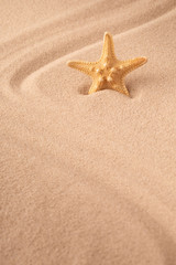 one single sea star or starfish on tropical beach sand. Concept for summer holiday vacation. Sandy background with empty space.