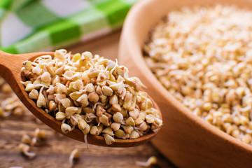fresh green sprouts buckwheat in wooden bowl closeup