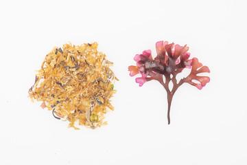 Irish Moss Carrageen Seaweed