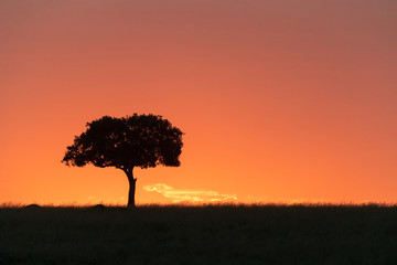 Wall Mural - Silhouette Single Tree at Sunset in Kenya Africa