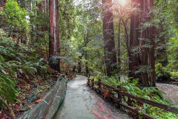 Trees at Muir Redwood park
