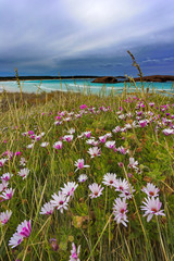 Wild flowers at Twilight Cove in Western Australia