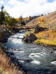 Yellowstone River with Autumn Vegetation in Yellowstone National Park
