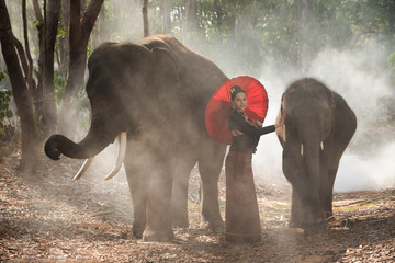 Thai Beautiful girl with elephants