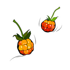 Two painted cloudberries on a white background with touches