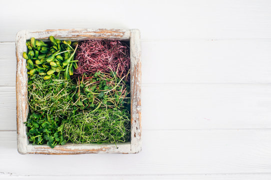 Micro greens sprouts of radish, amaranth, mustard, beetroot and onion in wooden box