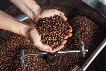 Grains of fresh coffee roasting in hands on the background of the roaster