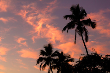 black silhouettes of palm trees on a pink blue sunset sky