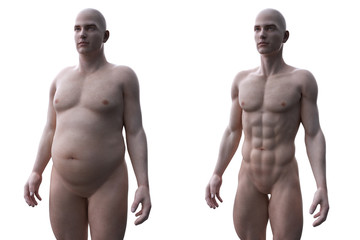 3d rendered medically accurate illustration of a comparision of a fit and obese male Wall mural