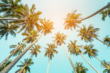 coconut palm tree in seaside, summer vacation to tropical island concept for background.  Wall mural