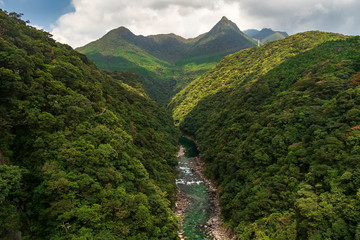 Anbo River in Yakushima is a very beautiful river. It can be seen from the bridge that is very high, so it can see the flow of the river from the mountain to the beach